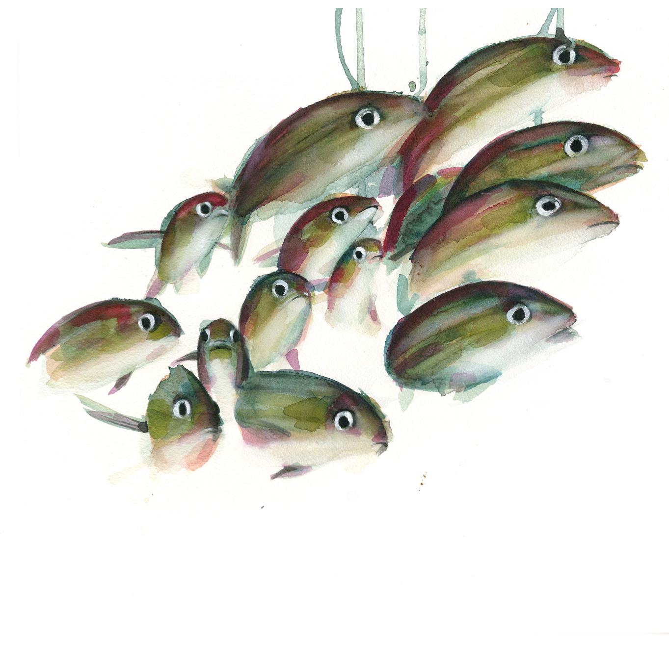 Banco de peces( baja)