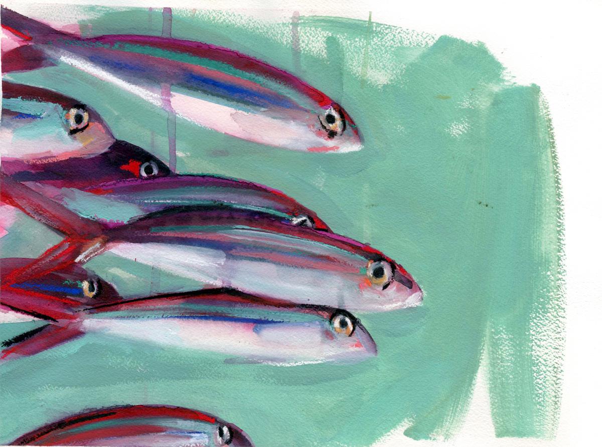 Banco de peces2
