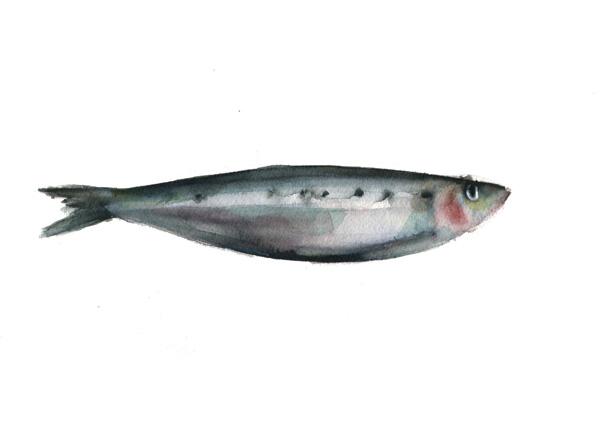 sardina2 (baja)