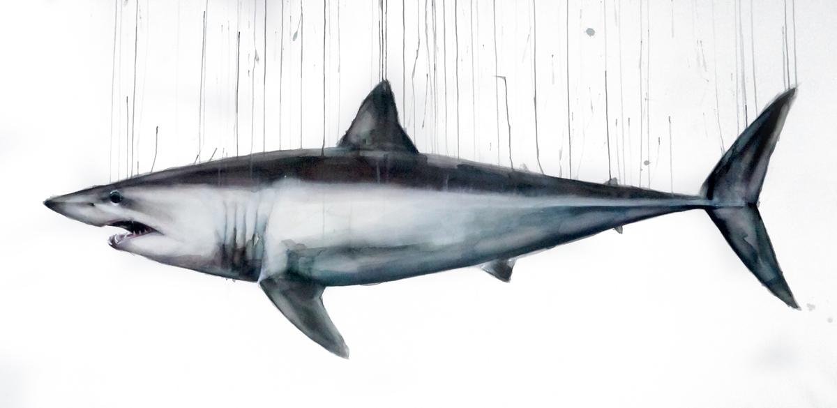tiburón ( baja)