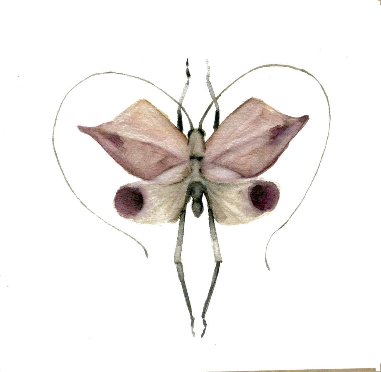 mariposa65