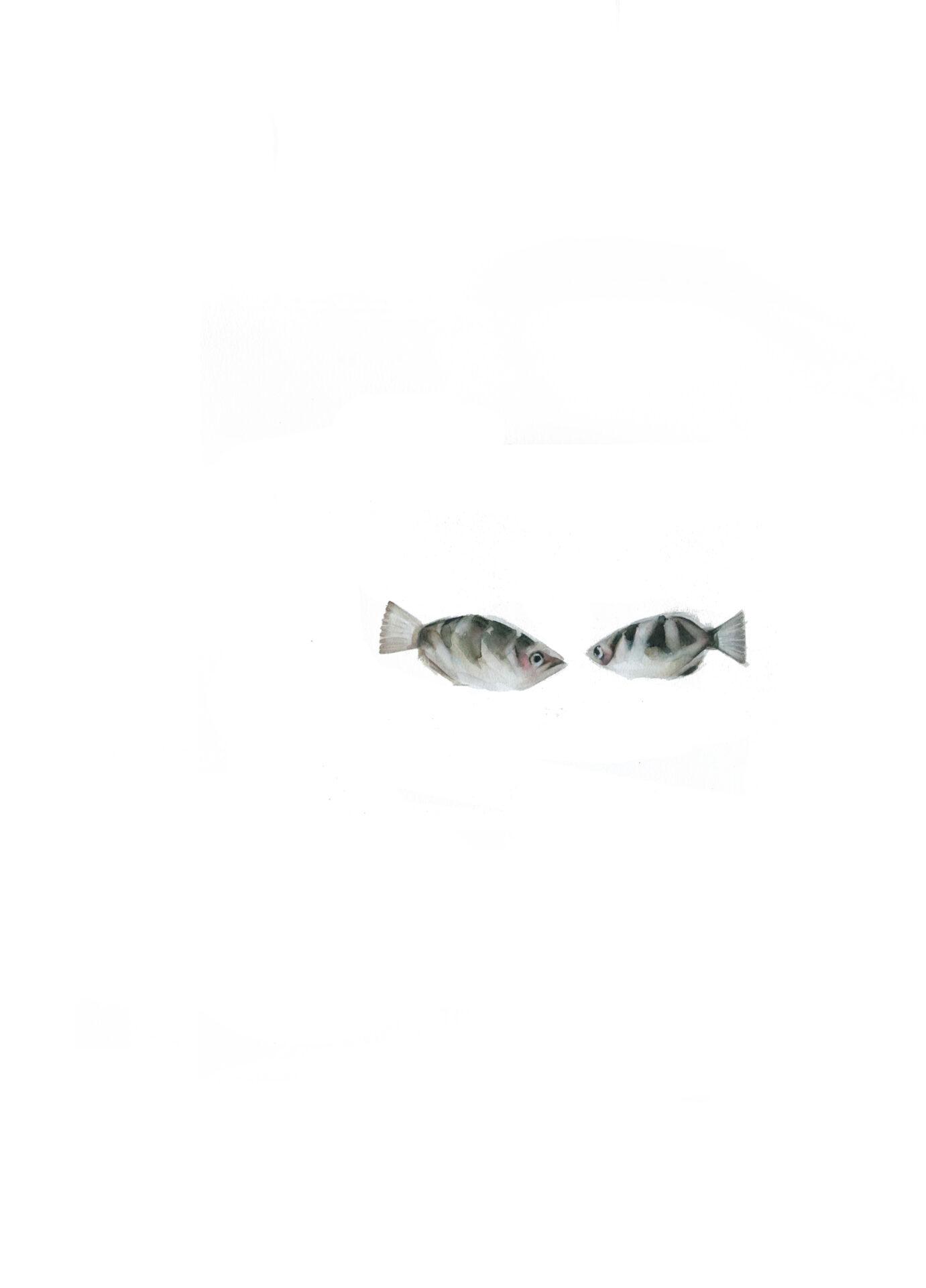 peces rayas