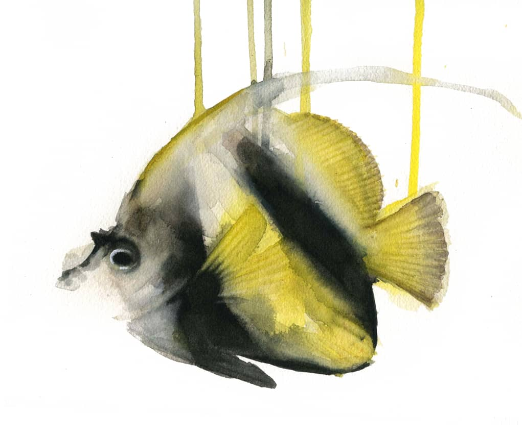 pez estandarte